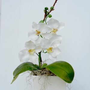 Blütenkurs Orchidee: Phalaenopsis @ Backschwestern-Laden | Eppelborn | Saarland | Deutschland