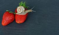 Schnecke mit Erdbeeren