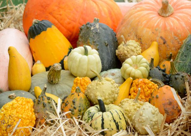 Herbst Pumpkin